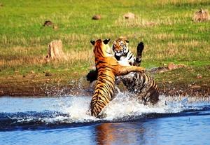 Wildlife Trip to Tadoba-3days @ Rs8900/-