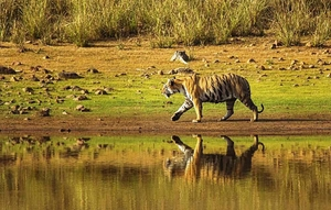 Wildlife Trip to Tadoba - 3days