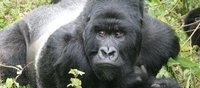Uganda Safaris Travel Blogger