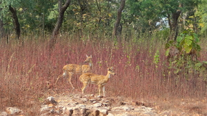 Forest stories @ Tadoba Andhari reserve