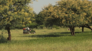 Solo trip to Ranthambhore - Life changing and how :)