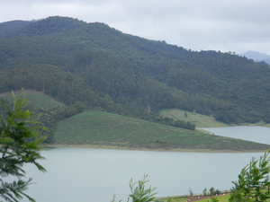Colonial blues of the Nilgiri