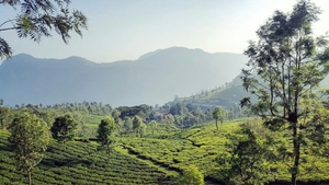 The Blue Mountains - Nilgiris