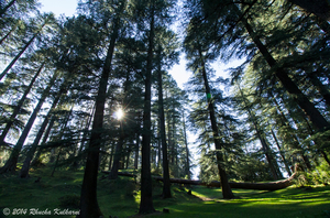Dalhousie Diaries - Day 1