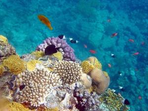 Snorkeling & diving in Sharm El-Shiekh