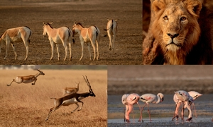 Budding wildlife photographer ?? then Gujarat is your place