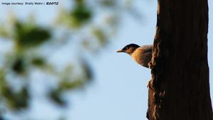 Watch The Birdie @Bharatpur
