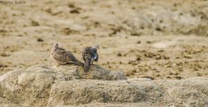 Flying Happiness – Bird Walk at Pench Tree Lodge