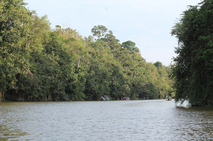 Kinabatangan River Cruise, Sandakan