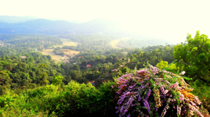 Coorg~ a beautiful place to be lost