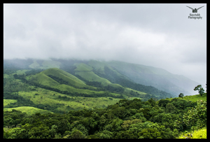 Chikmagalur: Tranquility and Nature