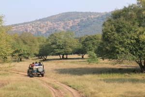 The Ranthambore Diaries