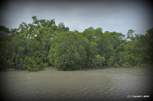 Sunderbans, nature's most creative and deadliest swamp