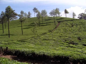 A Trip to Munnar –The Queen of Hill Stations in India & Top Reasons why You Should Visit this Kerala