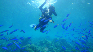 SHARM- EL- SHEIKH: An unforgettable diving experience in the red coral reefs!