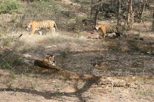 Wild Ranthambhor