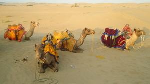 Jaisalmer: The golden trance