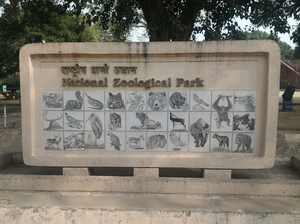 Yay! It's A Zoo Time!