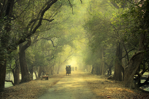 Day Trip To Keoladeo National Park - Pure Bliss For Bird Lovers!