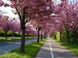 Macon - The Cherry Blossom Capital Of The World