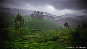 Enchanting Monsoon moods in Kerala , India