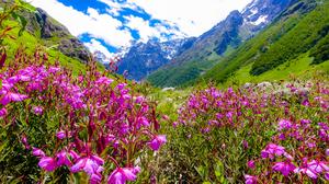 Valley of Flowers - UNESCO HERITAGE-  Hemkund - Mana