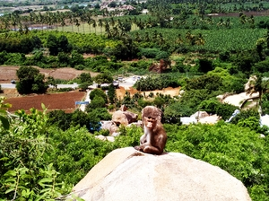 Hampi - Where monkeys rule!