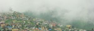 Kodaikanal:The gift of forest