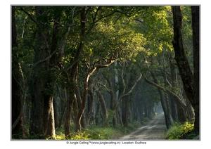 Bhaiya jungle dikhao...