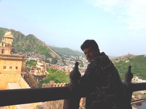 Royal Jaipur
