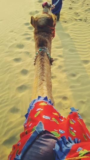 When two days weren't enough for us – Jaisalmer