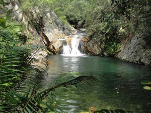 Nagala - Jungle Me Mangal