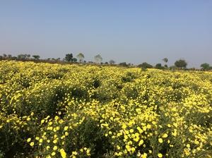 Nostalgia in Vikarabad-Ananthagiri Hill