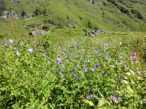Valley of Flowers : World's Garden  & Hemkund (Uttarakand, INDIA)