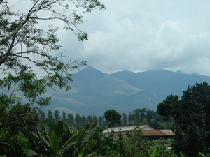 Wayanad & Ooty (India) - Come Fall in Love