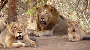 4 days short adventure trip to Porbandar & Gir forest national park