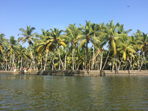 5 things that make KERALA the best travel destination in INDIA !