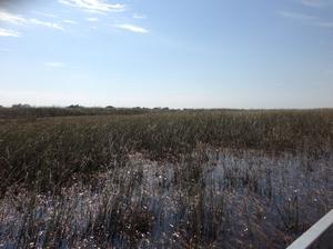 Everglades - Home for thousands of alligators
