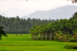 Wayanad, Kerala - First Impressions