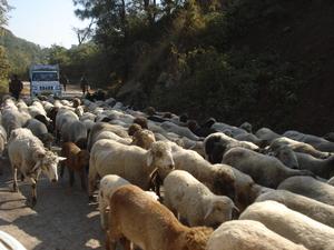A few days in Himachal......(3)