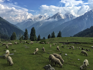 A Kashmiri Local's Guide To Exploring The Hidden Trails Of Aru And Lidderwat Valleys