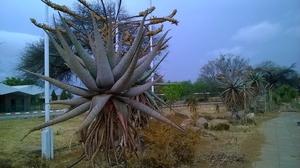 My travel to Botswana
