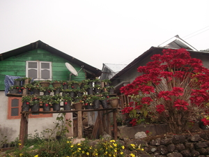 Samsing_ Strawberry Village In East Himalaya Near Dooars