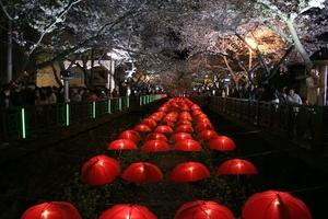 Jinhae Cherry Blossoms Festival 2017