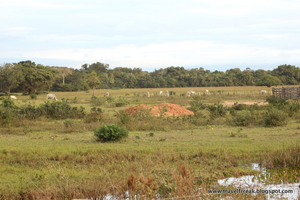 Pantanal – The Brazilian wetlands