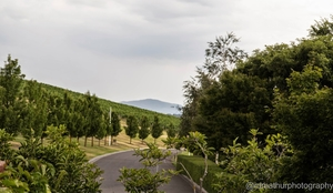 A beautiful day in Yarra Valley
