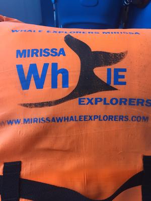 Whale watching in Mirissa -Sri Lanka