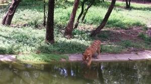 Nehru Zoological Park – Hyderabad