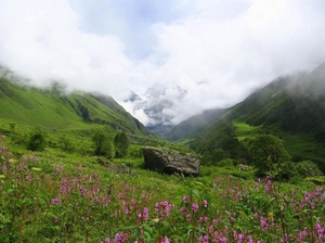 Valley Of Flowers Trek - Himalayas