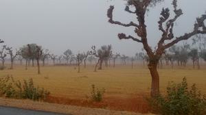 Royal Jaisalmer
